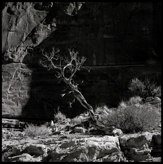 Shadow Tree, Capitol Reef