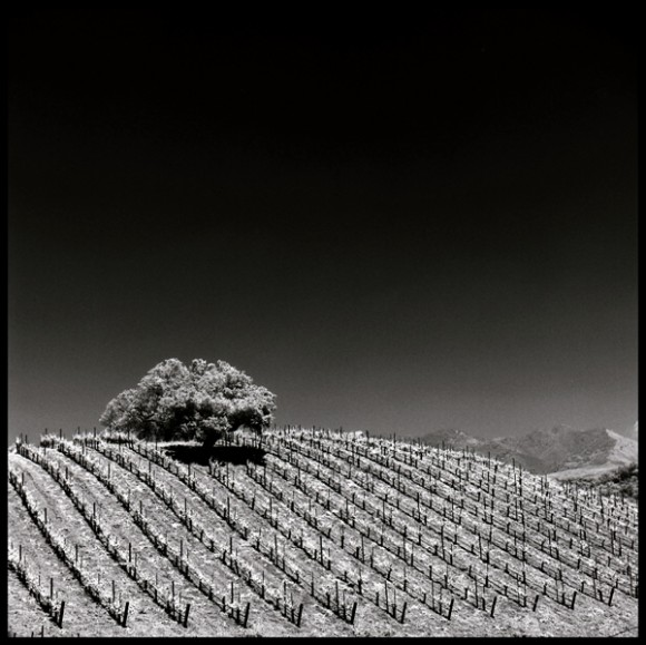 Vineyard Stripes, California